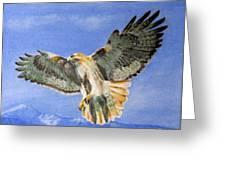 Red Hawk, 11x14, Oil, '07 Greeting Card