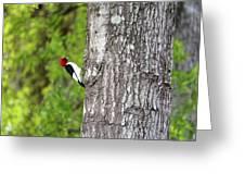 Red Head Bird Greeting Card