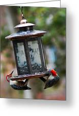 Red Head Wood Peckers On Feeder Greeting Card