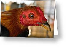 Red Headed Chicken Greeting Card