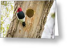 Red-headed Woodpecker At Home Greeting Card