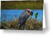 Red Heron Greeting Card