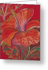 Red Hibiscus #1 Greeting Card