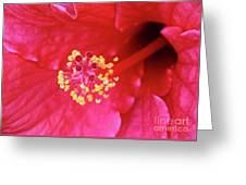 Red Hibiscus 3 Greeting Card