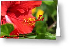 Red Hibiscus And Green Greeting Card