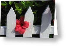 Red Hibiscus And White Fence Greeting Card