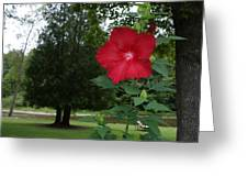 Red Hibiscus Highlights A Scene On The River Greeting Card