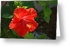 Red Hibiscus II Greeting Card