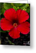 Red Hibiscus - Kauai Greeting Card