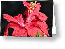 Red Hibiscus Square 2 Greeting Card