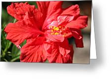 Red Hibiscus Square Greeting Card