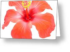 Red Hibiscus Vector Isolated Greeting Card