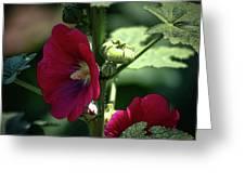 Red Hollyhock 1360 H_2 Greeting Card