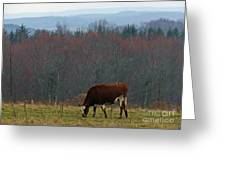 Red Holstein Of The Hills Greeting Card