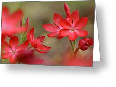 Red Hot Lilies Greeting Card