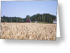 Red House Wheat Field Greeting Card