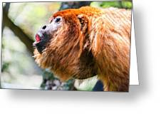 Red Howler Monkey Alpha Male Greeting Card