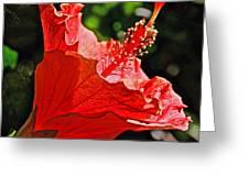 Red Hyacinth At Pilgrim Place In Claremont-california Greeting Card
