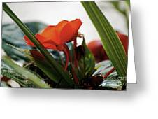 Red Impatiens Greeting Card
