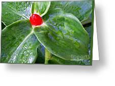 Red Jewel Greeting Card
