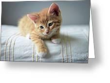 Red Kitten On A Beige Blanket Greeting Card