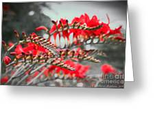 Red Lady Fingers Greeting Card