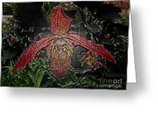 Red Lady Slipper Greeting Card