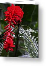 Red Lava Flower Greeting Card