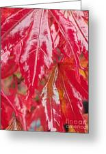 Red Leaf Abstract Greeting Card