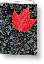 Red Leaf Almost Alone Greeting Card