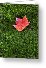 Red Leaf Green Moss Greeting Card