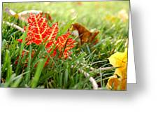 Red Leaf In Grass Greeting Card