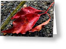 Red Leaves And Concrete Greeting Card