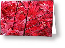 Red Leaves And Stems 2 Pd Greeting Card