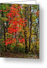 Red Leaves Of Autumn Greeting Card