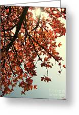 Red Life Greeting Card