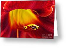 Red Lily Center 4 Greeting Card