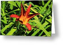 Red Lily Greeting Card