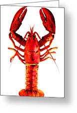 Red Lobster - Full Body Seafood Art Greeting Card