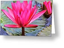 Red Lotus Greeting Card