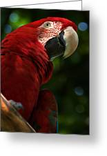 Red Macaw 2 Greeting Card