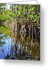 Red Mangrove Roots Reflections In The Gordon River Greeting Card