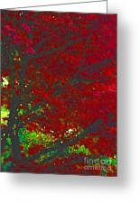 Red Maple 3 Version 1 Greeting Card