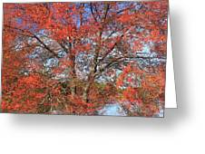 Red Maple Foliage Kaleidoscope Greeting Card