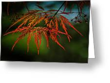 Maple Lace 2 Greeting Card