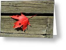 Red Maple Leaf On A Boardwalk  Greeting Card