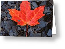 Red Maple Leaf On Black Shale Greeting Card