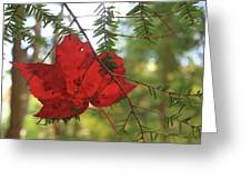 Red Maple Leaf On Hemlock Greeting Card