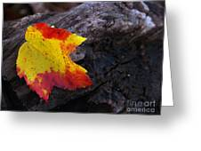 Red Maple Leaf On Old Log Greeting Card