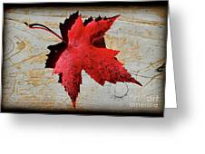 Red Maple Leaf With Burnt Edge Greeting Card